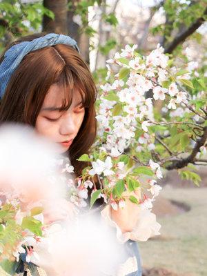 DailyRachel's 「Cherry Blossoms」themed photo (2018/04/07)