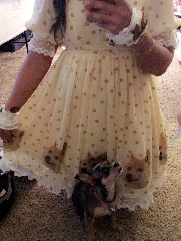 是LolliDoll以「Dog」为主题投稿的照片(2017/06/15)
